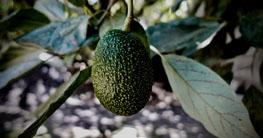 Avocado-Brokkoli